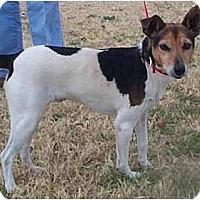 Adopt A Pet :: SKIPPER - Phoenix, AZ