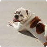 Adopt A Pet :: Silas - conyers, GA