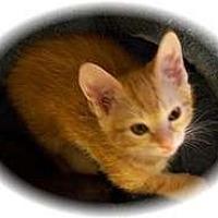 Adopt A Pet :: Tang - Shelton, WA