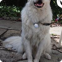 Adopt A Pet :: Seamus - Minneapolis, MN