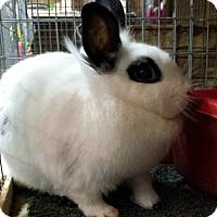 Adopt A Pet :: Sprout - Williston, FL