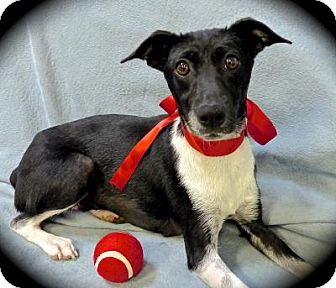 Terrier (Unknown Type, Small) Mix Dog for adoption in Baton Rouge, Louisiana - Elsie