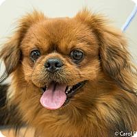 Adopt A Pet :: Yogi - Portland, ME