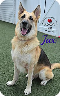 German Shepherd Dog Mix Dog for adoption in Youngwood, Pennsylvania - Jax