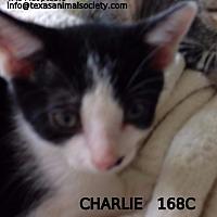 Adopt A Pet :: Charlie - Spring, TX