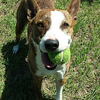 Adopt A Pet :: Miss Tess - Orange Lake, FL