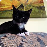 Adopt A Pet :: Boomer (LD) - Trenton, NJ