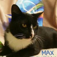 Adopt A Pet :: Max - Fairfax Station, VA