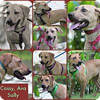 Adopt A Pet :: Three Sisters - Pawling, NY