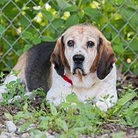 Adopt A Pet :: Happy Jack - Transfer, PA