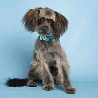 Adopt A Pet :: BROWSY - Phoenix, AZ