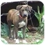 Photo 2 - Catahoula Leopard Dog Mix Dog for adoption in Tyler, Texas - TG-Nathan