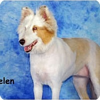 Adopt A Pet :: Helen - Ft. Myers, FL