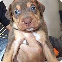 Adopt A Pet :: Giovanni - Burlington, NJ