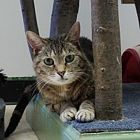 Adopt A Pet :: Cricket - Elyria, OH