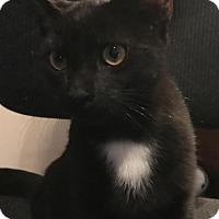 Adopt A Pet :: Mork - Trenton, NJ