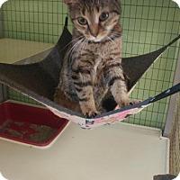 Adopt A Pet :: Bonnie - Lunenburg, VT