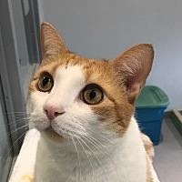 Adopt A Pet :: Simba - Lafayette, NJ