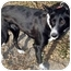 Photo 3 - Border Collie Mix Dog for adoption in Leoti, Kansas - Cleo