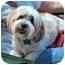 Photo 3 - Lhasa Apso Dog for adoption in Los Angeles, California - JOE JOE