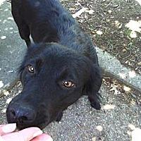 Adopt A Pet :: April Archer - Southampton, PA
