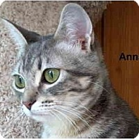 Adopt A Pet :: Anna - Portland, OR