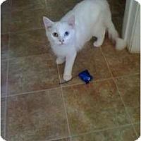 Adopt A Pet :: Ivories-Snow White - Mobile, AL