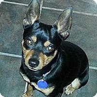 Adopt A Pet :: AJ - Nashville, TN
