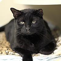 Adopt A Pet :: Riff Raff - Chicago, IL