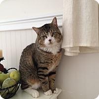 Adopt A Pet :: Brooklyn - St. Louis, MO