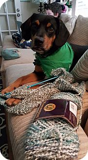 Hound (Unknown Type) Mix Dog for adoption in Alpharetta, Georgia - Tres
