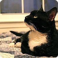 Adopt A Pet :: Fancy - Ortonville, MI