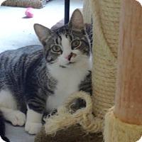 Adopt A Pet :: Smudge - Colmar, PA
