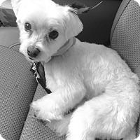 Adopt A Pet :: Mojo - Nanuet, NY