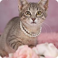 Adopt A Pet :: Rose - Plymouth, MN