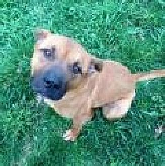 Boxer Mix Dog for adoption in Flintstone, Maryland - Jake