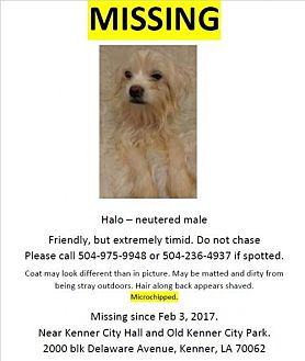 Maltese/Poodle (Miniature) Mix Dog for adoption in Kenner, Louisiana - Halo - LOST! Please share!