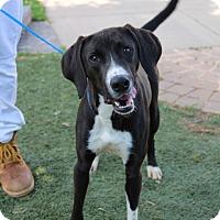 Adopt A Pet :: Kato - Greensboro, NC