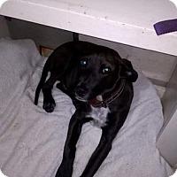 Adopt A Pet :: Baron - BONITA, CA