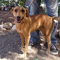 Adopt A Pet :: Bienne - Golden Valley, AZ