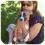 Photo 3 - Boxer/American Pit Bull Terrier Mix Puppy for adoption in Brooklyn, New York - Lola