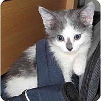 Adopt A Pet :: Fuzzbucket - Davis, CA