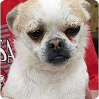 Adopt A Pet :: Bubba - Harrison, AR