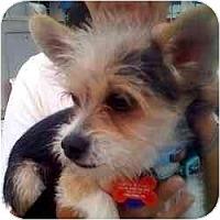 Adopt A Pet :: Chewbaca - Homestead, FL