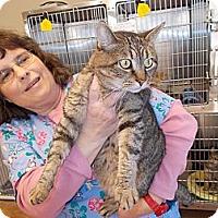 Adopt A Pet :: Tucker - Heber Springs, AR