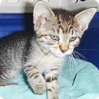 Adopt A Pet :: Esperanza - Chandler, AZ