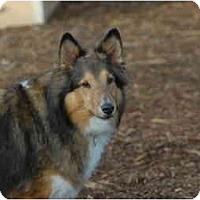 Adopt A Pet :: Roxy - Ft. Myers, FL