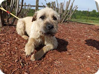 Terrier (Unknown Type, Medium) Mix Dog for adoption in Thomaston, Georgia - Sheeka