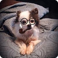 Adopt A Pet :: Poco - Knoxville, TN