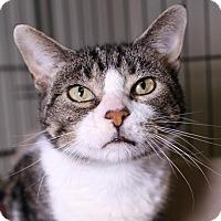 Adopt A Pet :: Isabela - Winston-Salem, NC
